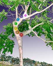 Dancing Tree Chakras
